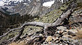 Dead tree trunk.jpg