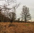 Delleboersterheide – Catspoele Natuurgebied van It Fryske Gea. Omgeving van Catspoele 02.jpg