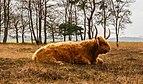 Delleboersterheide – Catspoele Natuurgebied van It Fryske Gea. Omgeving van het heideveld 05.jpg
