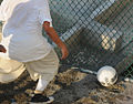 Detainees play soccer in the recreation area of Camp Six -f.jpg