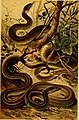 Deutschlands Amphibien und Reptilien (1890) (20895735481).jpg