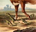 Discontentedfrogs-07.png