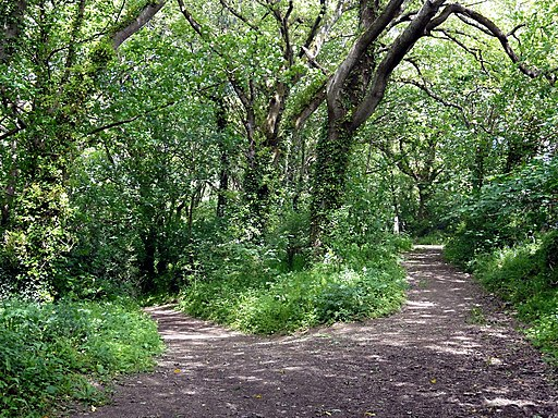 Diverging Woodland Paths - geograph.org.uk - 2403119