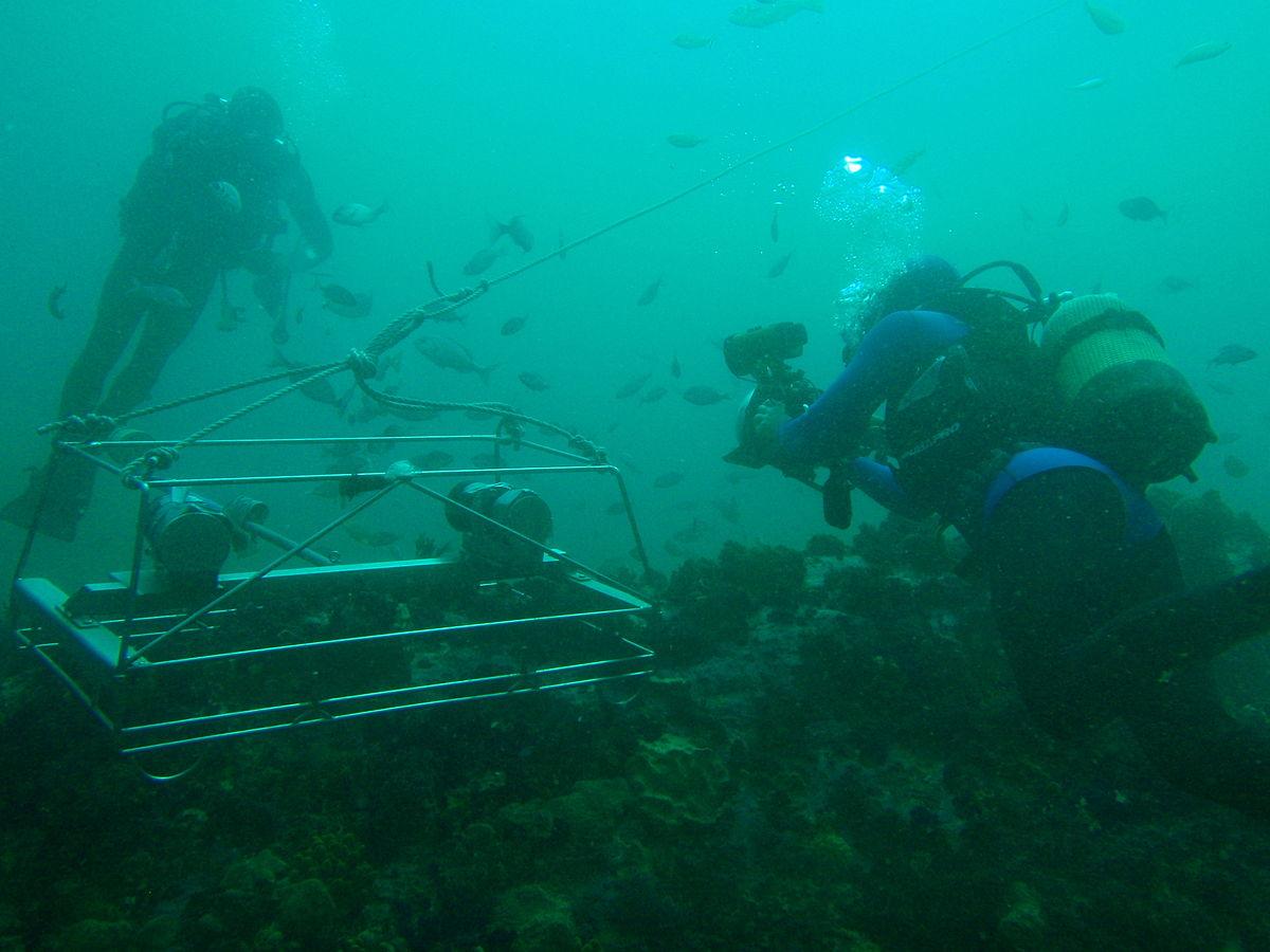Baited Remote Underwater Video Wikipedia