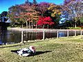 Doho park November 2012.jpg