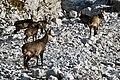 Dolomites (Italy, October-November 2019) - 168 (50587286496).jpg