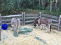 Donkeys (28270253741).jpg