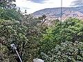 Dosel arbóreo desde el Museo de la Ciudad, Cerro Nutibara.jpg