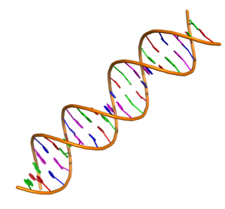 Nucleic acid double helix The structure formed by double-stranded molecules of nucleic acids such as DNA.