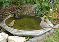 Dove, spotted towhee, and hooded oriole at the bird bath (26754394554).jpg