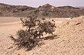 Dunst Namibia Oct 2002 slide309 - karger Bewuchs.jpg