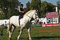 Duo de cavalières mondial du cheval percheron 2011Cl J Weber07 (24000875071).jpg