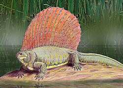 meaning of edaphosauridae
