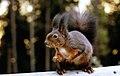 Eichhörnchen-001.jpg