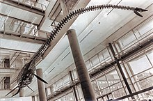 Gray skeleton with a long neck hanging form a ceiling