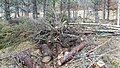 Electric Fence (Glen Lui) on Mar Lodge Estate (15MAR13) (26).jpg