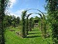 Elizabeth Park, Hartford, CT - rose garden 5.jpg