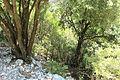Entre els arbres.JPG