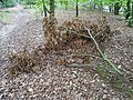 Epping Forest 20170727 112800 (49374827292).jpg