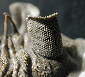 Calcite - Image: Erbenochile eye