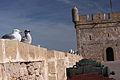 Essaouira, Morocco (8141935996).jpg
