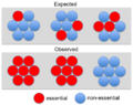 Essential proteins in yeast complexes.png
