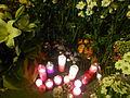 Estació de Sant Gervasi amb flors, espelmes i missatges per la mort d'en Alfonso Bayard P1470958.jpg