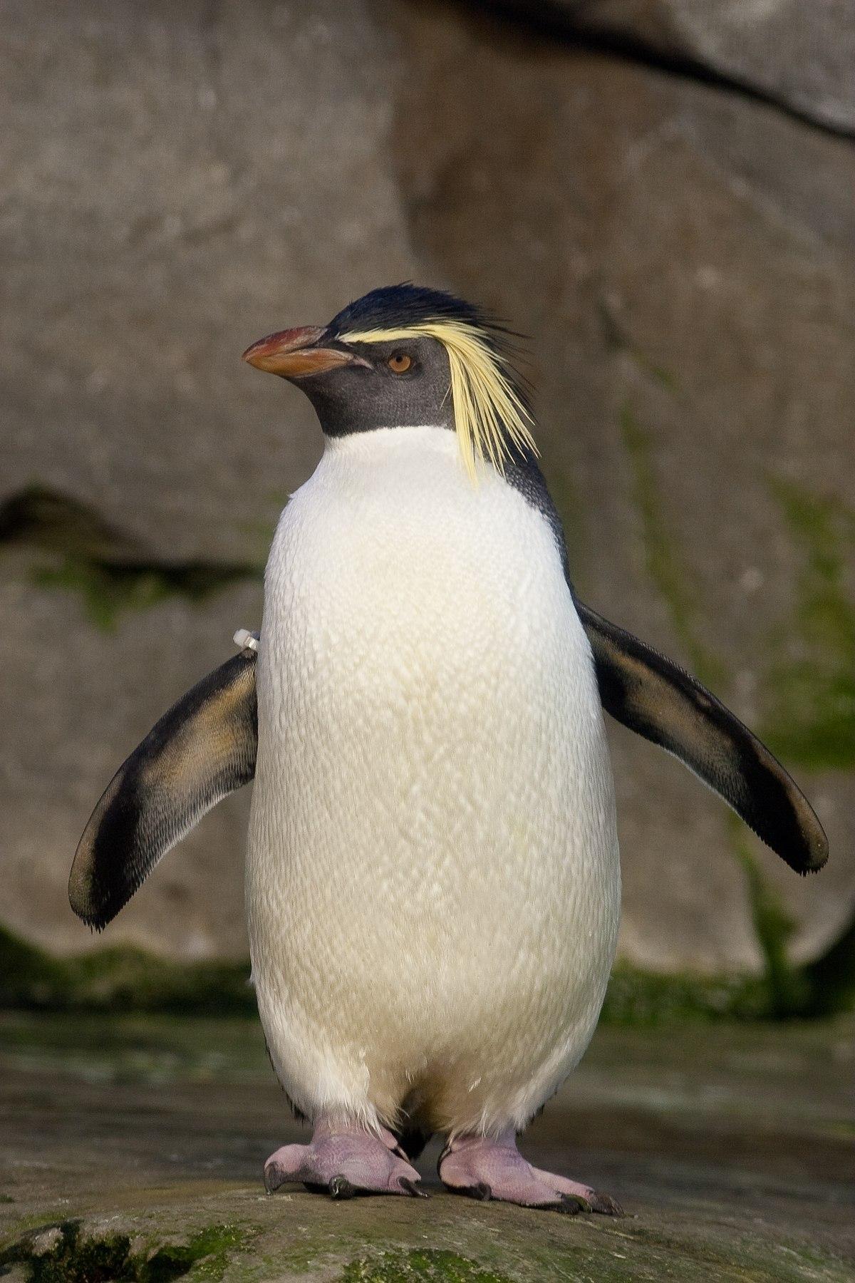 penguin - photo #35