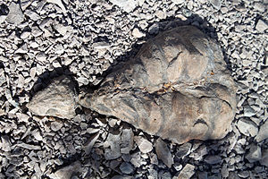 Eunotosaurus - Fossil specimen, on display at Karoo National Park