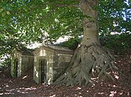European Beech Tree and Mausoleums at Green-Wood Cemetery, Brooklyn, NY - September 19, 2015