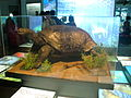 Expo2012 Theme pavilion Giant tortoises.JPG