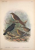 Extinct birds - an attempt to unite in one volume a short account of those birds which have become extinct in historical times - that is, within the last six or seven hundred years - to which are (14752202102).jpg