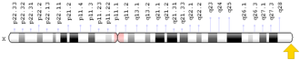 Factor VIII - In human, the F8 gene is located on the X chromosome at position q28.