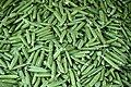FI-18 - Helsinki - Green - Plantae - Fabales - Phaseolus Vulgaris - Magnoliopsida (4891911174).jpg