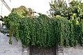 Façade avec des plantes de la maison numéro 37 rue Admirault (3).JPG