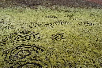 Fairy ring - Fairy rings in moss in Iceland