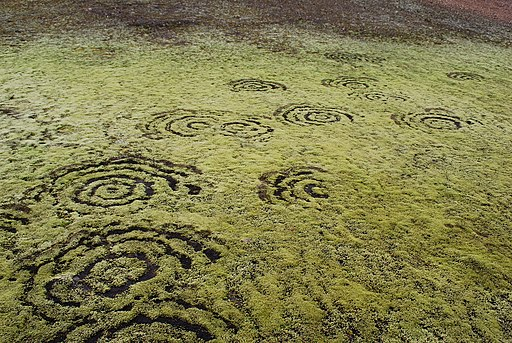 Fairy ring on Iceland