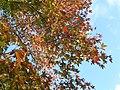 Fall at FLSP (5248763643).jpg