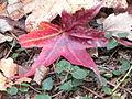 Fall at FLSP (5249370712).jpg