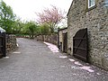 Fallen blossom, Cracoe - geograph.org.uk - 424861.jpg