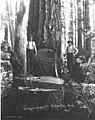 Falling crew, Goodyear Logging Company, ca 1919 (KINSEY 129).jpeg