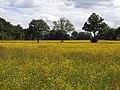 Farmland, Tadley - geograph.org.uk - 1776044.jpg