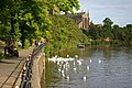 Feeding swans on the Severn at South Quay - geograph.org.uk - 1611160.jpg