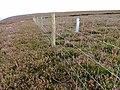 Fence, Arden Great Moor - geograph.org.uk - 52931.jpg