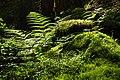 Ferns and mosses in Gullmarsskogen ravine.jpg