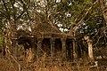 Ficus temple.jpg