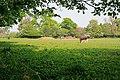 Field between Home Lane and Locks Lane, Sparsholt - geograph.org.uk - 418109.jpg