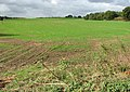 Field north of Easthill Lane - geograph.org.uk - 1532694.jpg