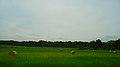 Field of Round Bales - panoramio (2).jpg