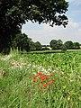 Fields by Oaks Farm - geograph.org.uk - 895389.jpg